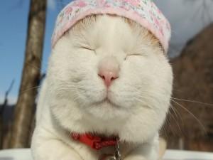 La cara de un gato dormido