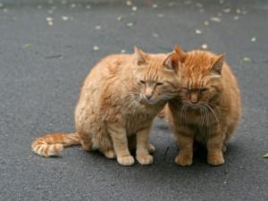 Dos gatos dormitando juntos