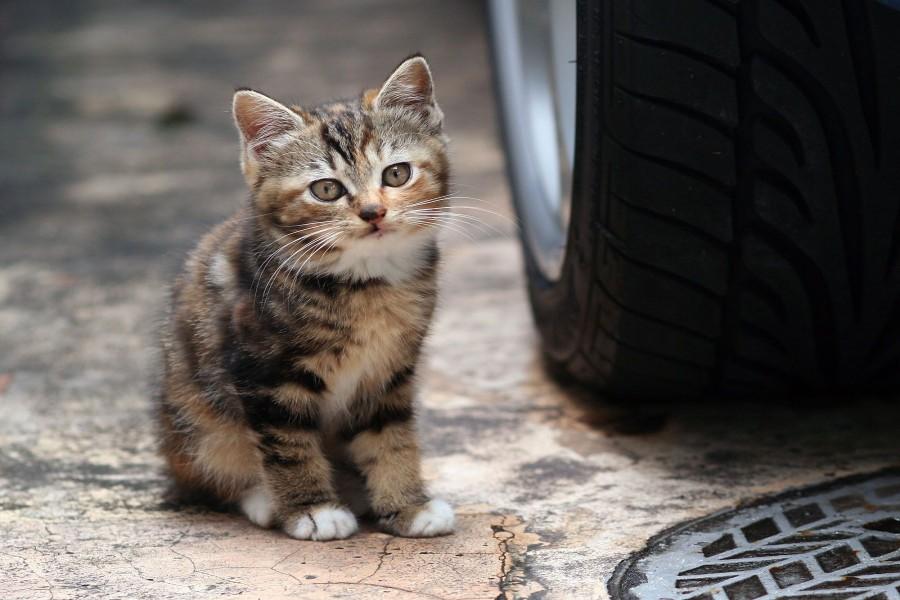 Gatito junto a la rueda de un coche