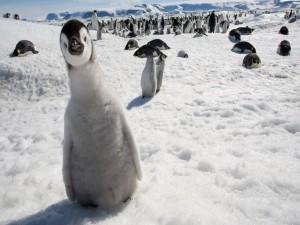 Un simpático pingüino