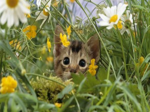 Gato escondido entre las flores