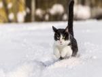 Un gato corriendo por la nieve