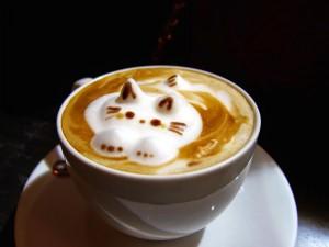 Gatito en una taza de café