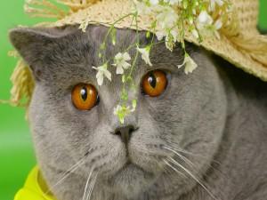 Gato con un sombrero