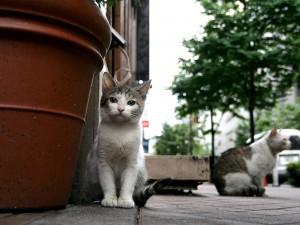 Gatos en una calle
