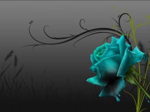 Rosa azul perdiendo su color