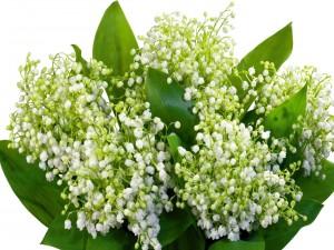 Flores blancas entre hojas verdes