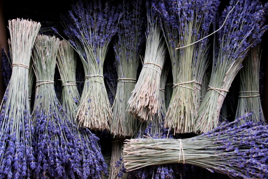 Varios paquetes de lavanda color púrpura