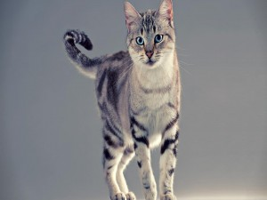 Bonito gato con largos bigotes