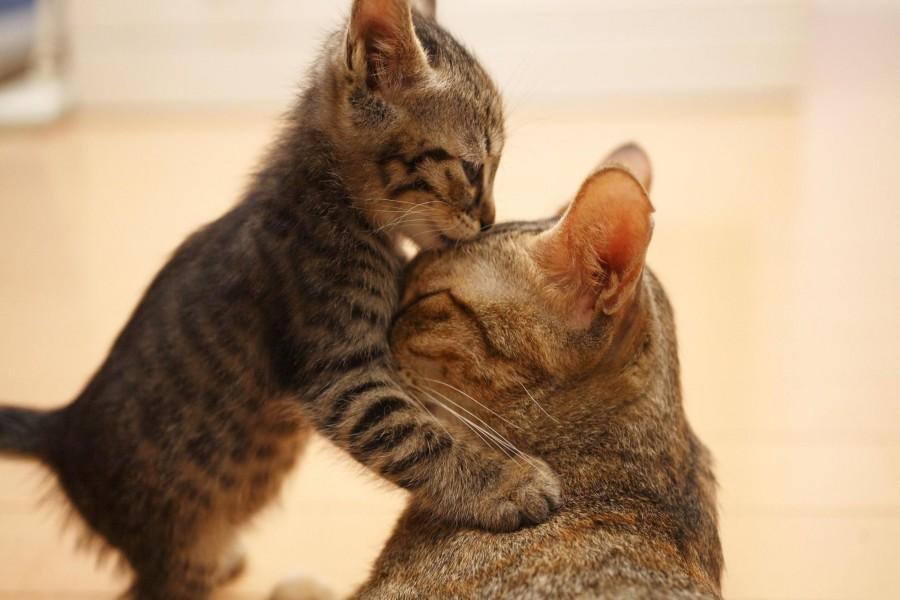 Gatito besando a mamá