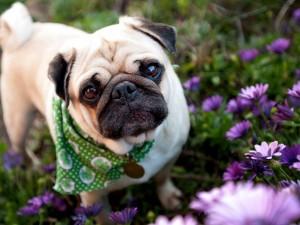 Pequeño perro entre las flores del jardín