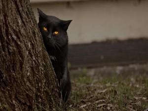 Gato negro junto a un árbol