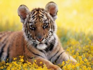 Un cachorro de tigre sobre las flores amarillas