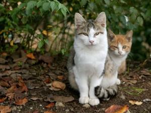 Dos gatos en un jardín