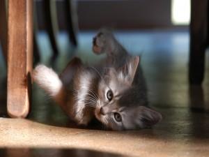 Pequeño gato tumbado en el suelo