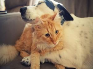 Gato entre las patas de un perro
