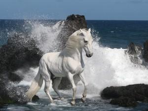 Caballo blanco junto al mar
