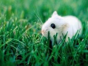 Ratoncillo en la hierba