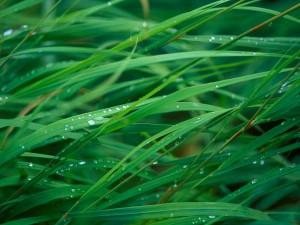 Gotas de rocío sobre la hierba
