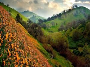 Flores en la ladera