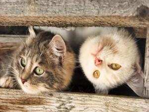 Dos gatos cotilleando