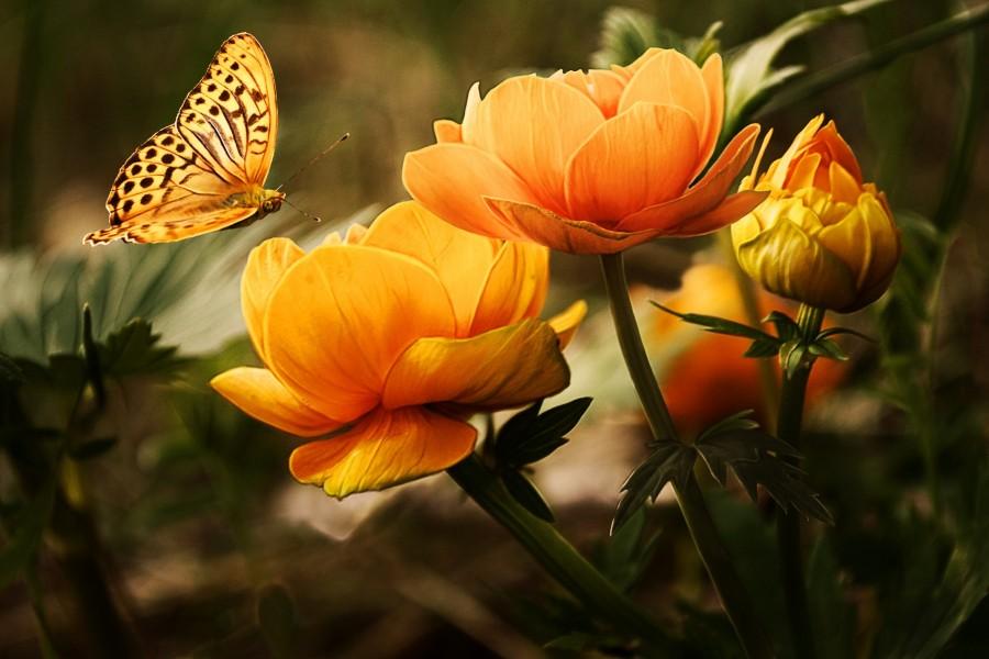 Mariposa sobre unas flores
