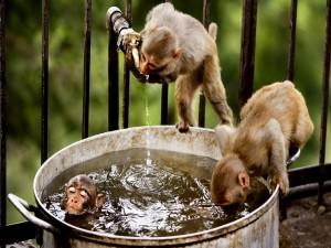 Monos disfrutando con el agua