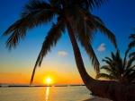Puesta de sol bajo las palmeras