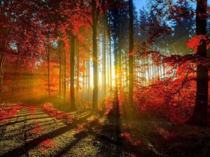 Puesta del sol a través de los árboles en otoño