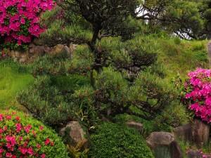 Arbustos con esplendorosas flores