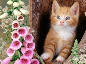 Gato junto a unas bonitas flores