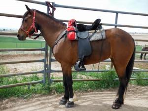 Un caballo listo para montar