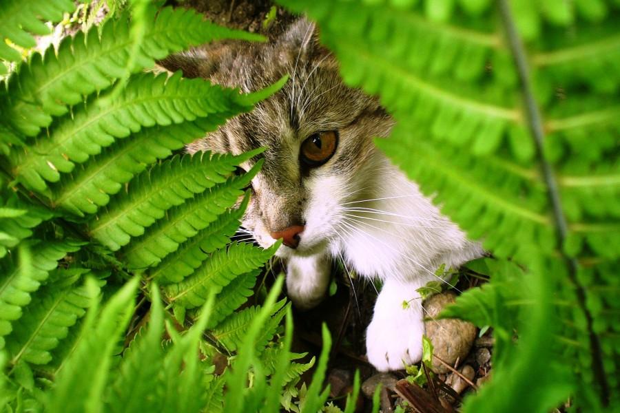 Gato escondido entre los helechos