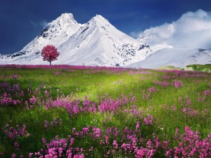 Flores junto a unas montañas nevadas