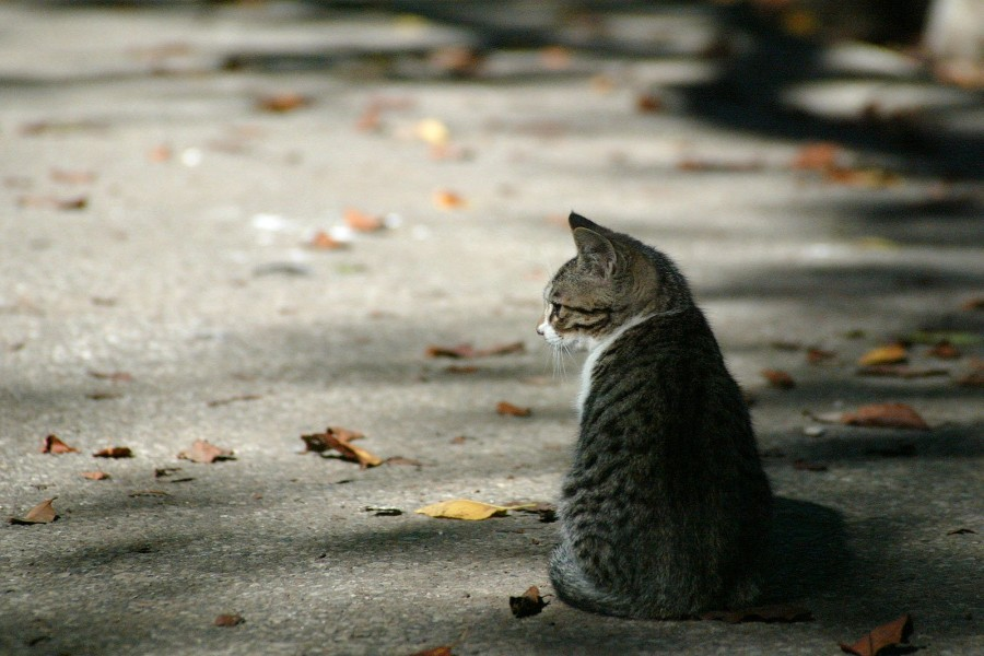 Gato visto en un día de otoño