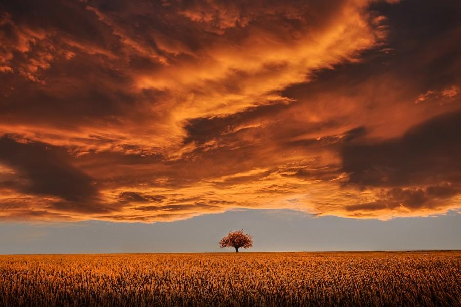 Cielo nuboso sobre un campo de trigo