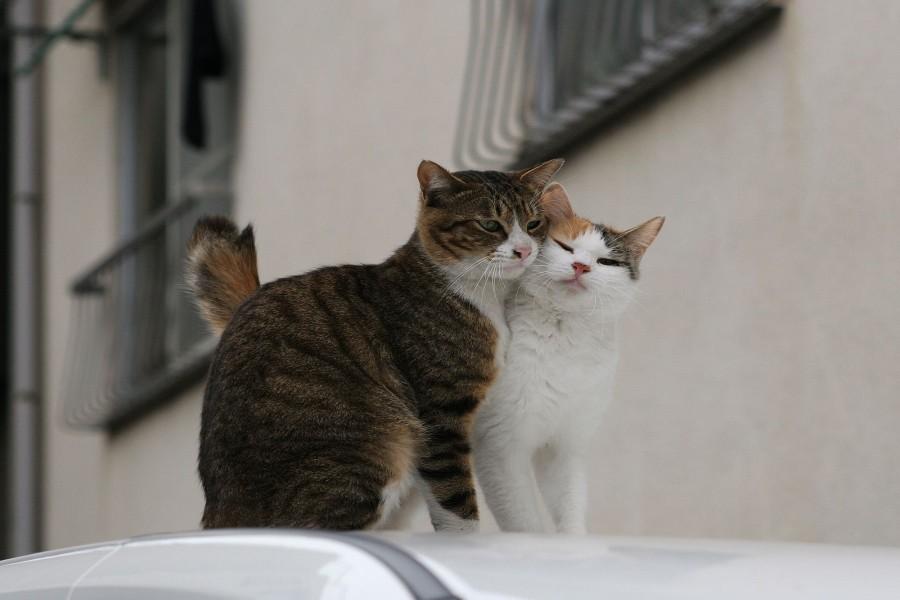 Pareja de gatos sobre un coche