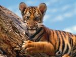 Un lindo cachorro de tigre