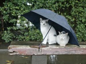 Dos gatos bajo un paraguas