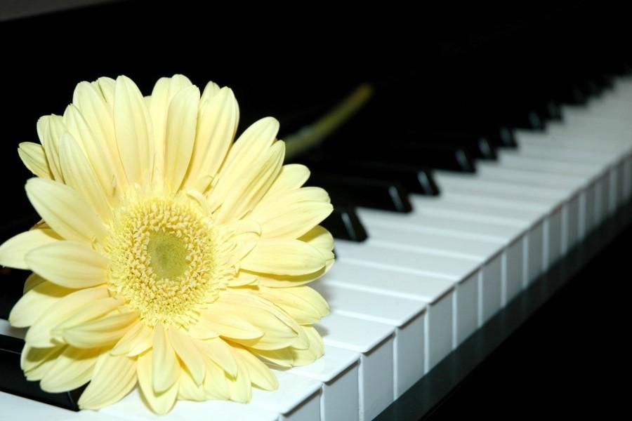 Gerbera amarilla sobre el teclado de un piano