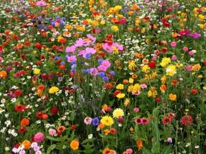 Campo con gran variedad de flores silvestres