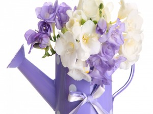 Fresias blancas y lilas en una regadera