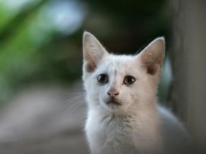 Gato con cara triste