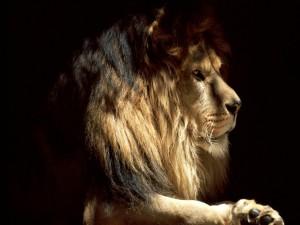 León en la penumbra