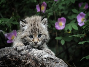 Gatito junto a un tronco