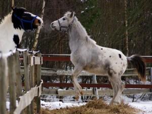 Dos bonitos caballos