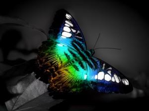 Mariposa de bonitos colores posada en una hoja