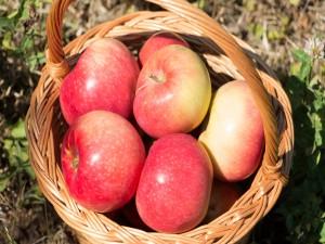 Manzanas frescas en una cesta