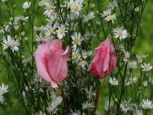 Rosas rosadas y flores silvestres