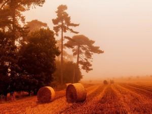 Rollos de paja entre la niebla